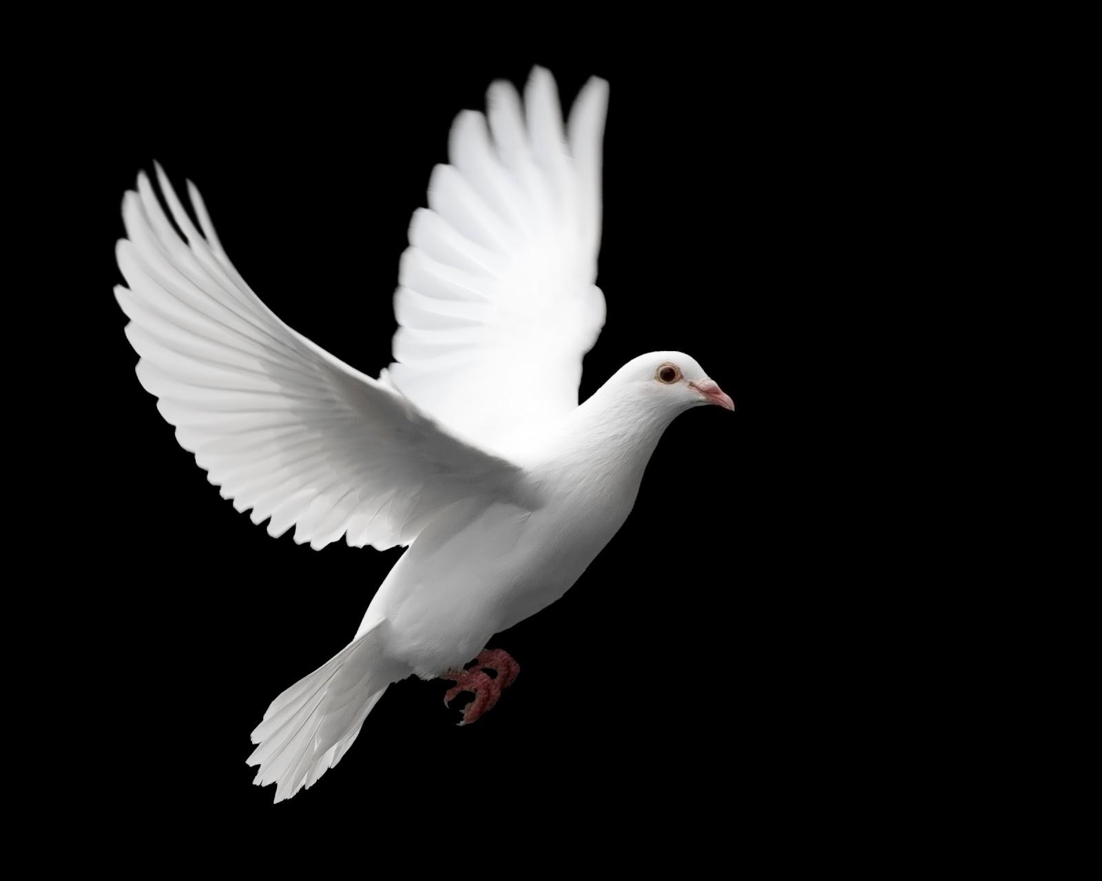 Wednesday Noonday Prayer: Spiritual Growth and New Beginnings